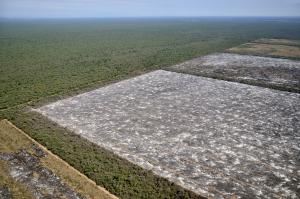 Argentina's Gran Chaco: forest is giving way to plantations.