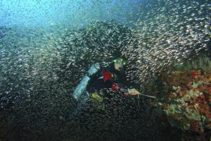 Biodiversity is globally in danger: diver near the Island Mindoro, Philippines.