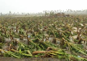 While diplomats discussed climate matters in Qatar's capital, Typhoon Bopha hit the Philippines.  According to media reports, more than 700 people were killed: a banana plantation after the storm.