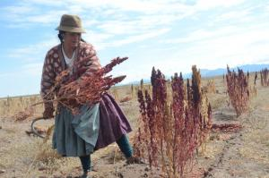 The Left Party wants to promote the creation of value chains in the countries of the global south so that people can make a living from more than just the sale of agricultural products. A quinoa farmer in Bolivia.