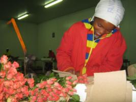 Kenyan cut flower farm  –  rural businesses can become included even in global supply chains.