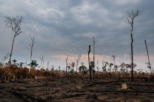 Brazil's president is not interested in accurate assessments of rain-forest destruction's true extent.