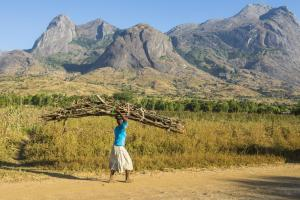 In the global south it is usually the task of women and girls to collect firewood: girl in front of Mount Mulanje in Malawi.