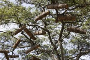 Bees are the most important pollinators. Beehives in trees in Ethiopia.