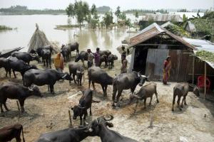 Ahead of this year's floods in Bangladesh, the German Red Cross distributed cash, so affected people could bring themselves and their cattle to safety.
