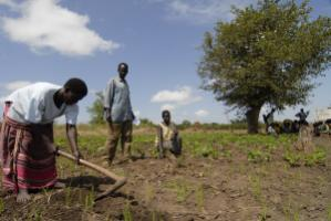 Agricultural training in Uganda: Smallholder farmers need more support, especially women.