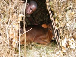 Around 800 million people still live in extreme poverty. This Rwandan cowherd is one of them.
