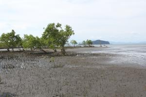 Conservation International helps to restore mangrove forests in Verde Island Passage, Philippines.