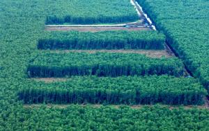 Deforestation of the rainforest for palm oil plantations in Sumatra.
