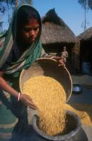Staples such as rice do not contain important micronutrients: woman in West Bengal.