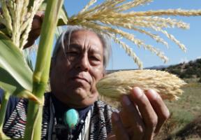 """Tribal elder and seed keeper Louie Hena in Tesuque Pueblo in the US state of New Mexico holding """"Mother Maize"""", the ancestor of the maize varieties he cultivates."""