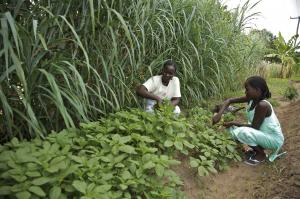 Agricultural production must increase: women on a model farm in Tanzania.