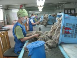 Formal-sector jobs make a difference: sorting cashmere wool in Ulaan Bataar.