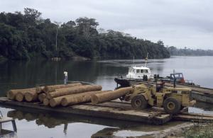 International timber corporations benefit from the exploitation of tropical forests: tree trunks on the Kouilou River in west DRC.