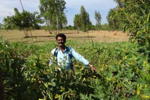 Farmer Rakash Chinappa shows his organic lentils, which he grows for Sahaja Organics.