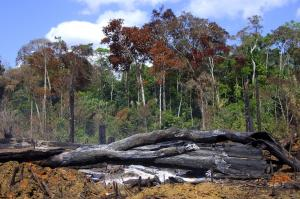 Displaced people may see no alternative of destroying forests to start new farms: slash- and-burn cultivation in Brazil.