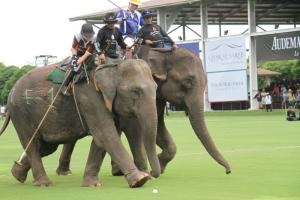 Every year Minor International organises an elephant polo tournament in Thailand to promote and raise funds for its elephant projects.
