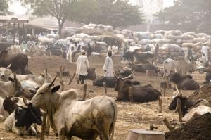 Pastoralists depend on water resources too: livestock market in Kano State.