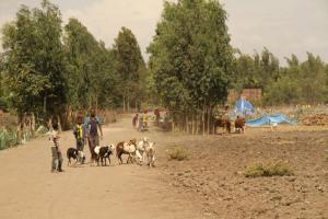 Due to global warming, thousands of pastoralists have lost livestock and been displaced in Ethiopia.