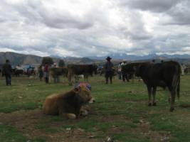 Rural development banks need other rules than multinational investment banks: farmers' market in Peru's Andes.