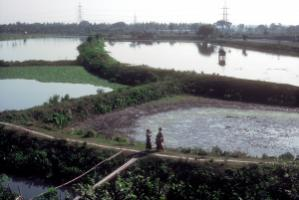 Nur dank Richterspruch gibt es die East Kolkata Wetlands noch. s, the wetlands would be gone.