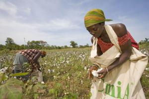 The brand CmiA stands for cotton produced according to strict sustainability criteria.