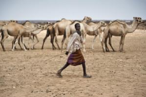 Pastoralists help in many ways to preserve ecosystems and food security.