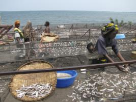 People hardly eat meat and fish: sorting fishermen's catch on the shores of Lake Kivu.