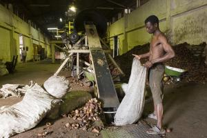 Factory worker employed in copra production in Quelimane, Mozambique. Copra is dried coconut flesh that is used to make coconut oil.