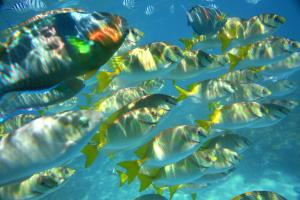 The conservation of biodiversity is a challenge no country can rise to on its own: coral fish off the coast of Tuvalu.