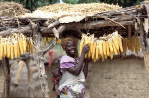 Maize is a stable food in Africa, and due to global warming there, suitable land for cultivating is becoming scarce: farmer in Burkina Faso.