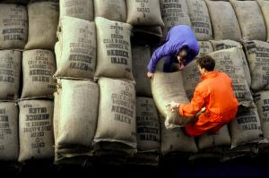 African countries are still commodity exporters: workers handling a cocoa shipment from Cote d'Ivoire in Amsterdam.