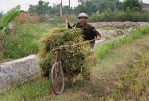 Almost all rural households have electric power in Vietnam, but supply still tends to be unreliable.