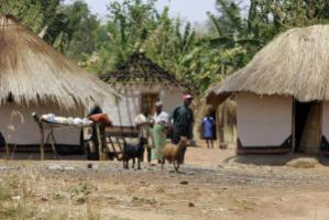 In Zambia, the goat business is still largely informal and does not contribute as much to farmers' livelihoods as it could.