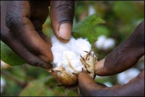 A good cotton harvest might help.