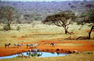 Nature needs protection: Tsavo West National Park in Kenya.