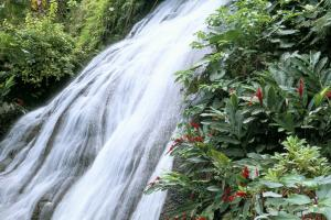 Jamaica has made  the WHO's Water Safety Plan part of its national regulations, protecting drinking waters as well as natural resources: Shaw waterfalls in Ocho Rios.