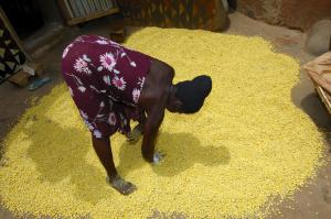 A woman spreads the seeds of the African locust bean tree out on the floor to dry. The African locust bean is an important food-producing tree in Burkina Faso.
