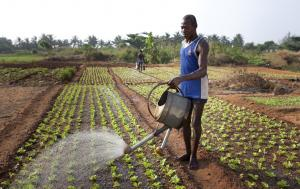 African farmers water fields with watering cans in December 2011.