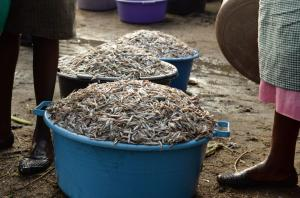 Buckets filled with Omena fish in Sindo, Kenya.