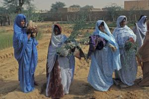 The UN Development System (UNDS) coordinates funds: UNDP afforestation project in Mauritania.
