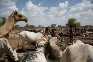 Many people in rural Africa live in close contact with their animals: Ethiopian herders.