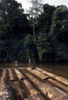 Monitoring showed that World Bank loans in support of the DRC government focussed on logging revenues rather than the fate of people who depend on forest resources: men building a raft to transport timber downstream.