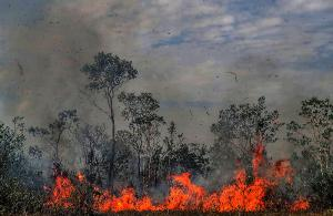 Forests in flames: here in Manicoré, in the Brazilian state of Amazonas.