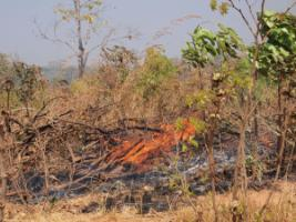 Slash-and-burn agriculture is common in southern Africa.