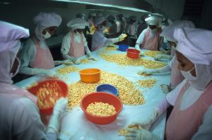 EU trade policy has an impact on development: women sorting shrimps for export purposes in Kochi, India.