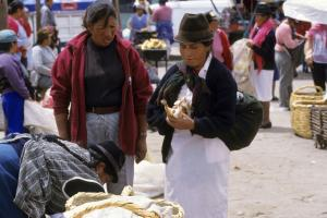 Cavies are sold for food at a market in Ecuador.