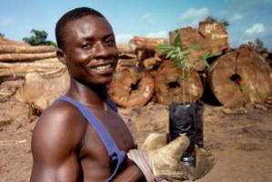 Prudent forestry offers new opportunities: Ghanaian worker