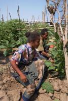 Vegetable gardening in Timor Leste: insurance companies need new approaches to cover subsistence farmers