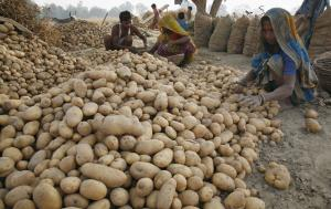 Food security is a global issue – potatoe farmers in Gujarat